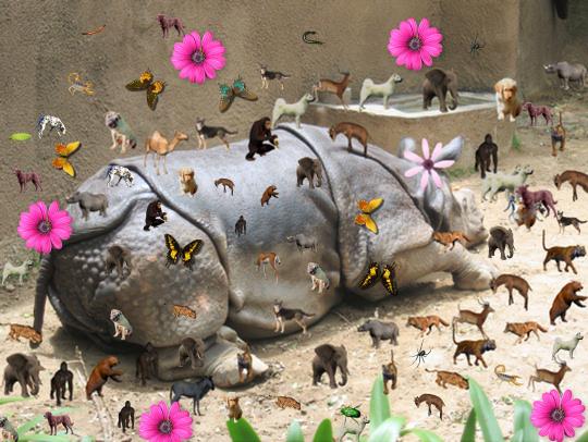 rhino-dreams.jpg