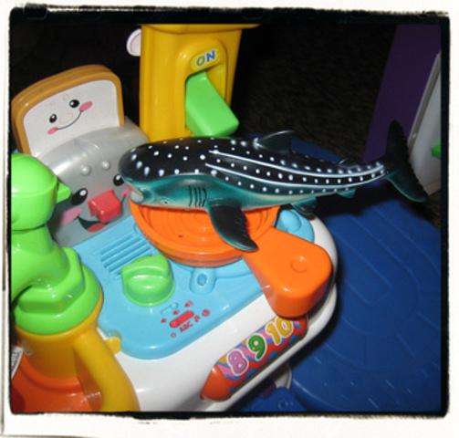 Whaleshark fry!