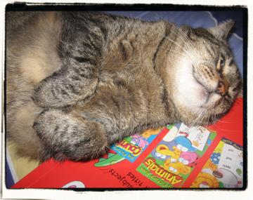 Snoozer!