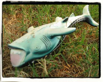 Discard: whale shark