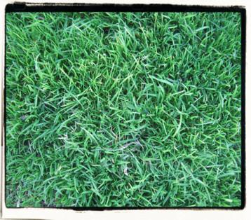 backgrass1.JPG