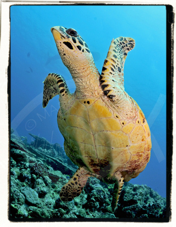 O sea turtle! You amaze…