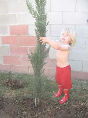 And now I will strangle the tree!