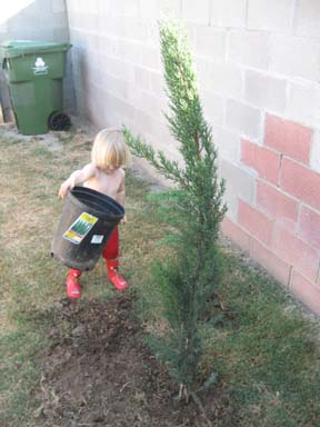 Doing this has nothing to do with planting the tree, ha ha!!!