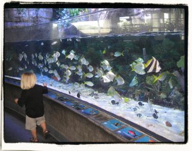 Fish! Fish! Fish!