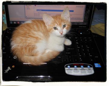 Komputer Kitten! Kute!