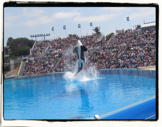 Thank you for entertaining us, Shamu.